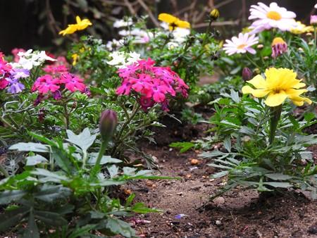庭 花の小路4