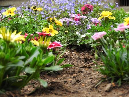 庭 花の小路8