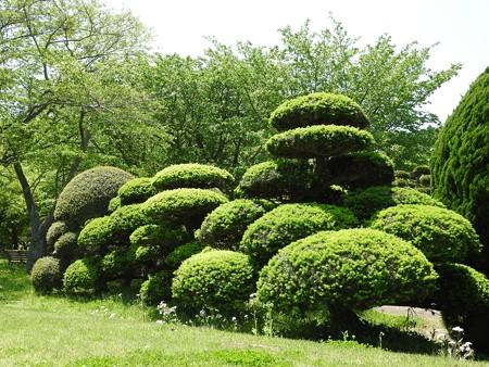 昭和の森20 市町村の森