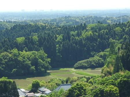 昭和の森38 展望台から