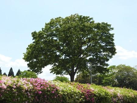 昭和の森47