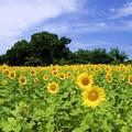 夏色の季節