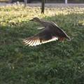 Flying  IV
