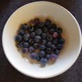 写真: ブルーベリー収穫