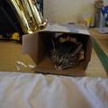 写真: 箱に入る