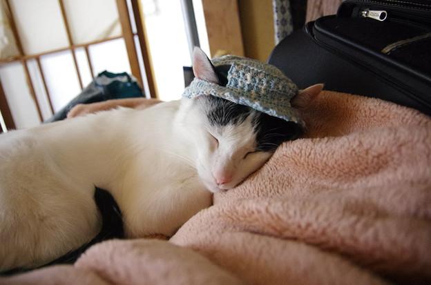 写真: hi-ragiさま帽子~マカロン