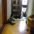 写真: 玄関の3にゃん