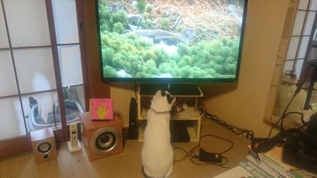 テレビらぶ