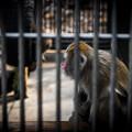 Photos: 寂しそうな猿@大宮公園
