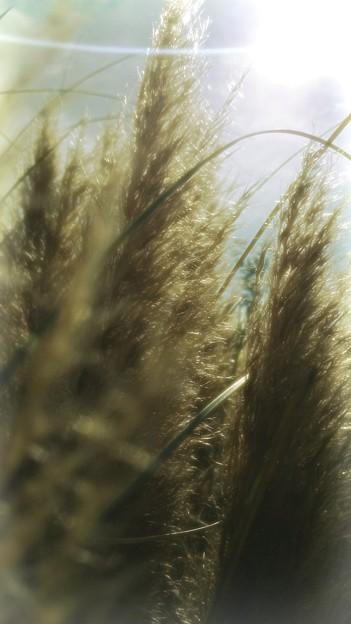 写真: 秋の日差し浴びて