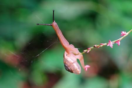 2014.07.22 瀬谷市民の森 ミズヒキの先で綱渡りのでんでんむし♪