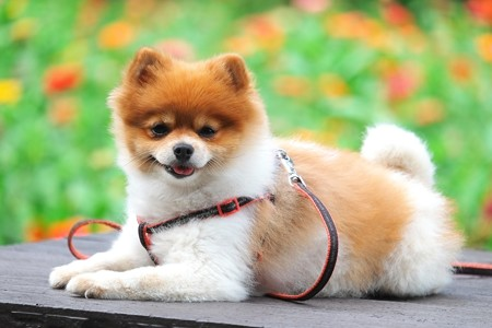 2014.09.19 追分市民の森 老夫婦と散歩の犬