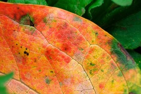 2014.10.12 追分市民の森 柿の葉