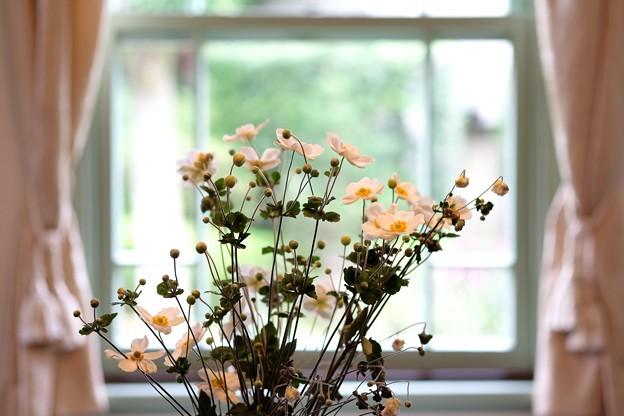 2015.10.02 山手 ブラフ18番館 窓辺の秋明菊