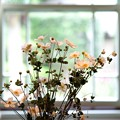 Photos: 2015.10.02 山手 ブラフ18番館 窓辺の秋明菊