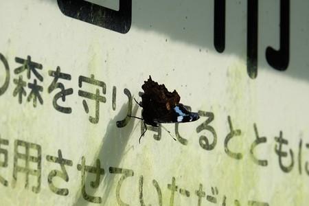 2015.10.06 瀬谷市民の森 看板に ルリタテハ 「モリマモリ」