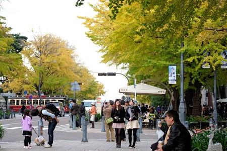 2015.11.29 みなとみらい 日本大通り 銀杏