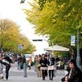 Photos: 2015.11.29 みなとみらい 日本大通り 銀杏