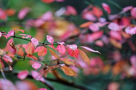 2015.12.03 瀬谷市民の森 赤い葉jpg