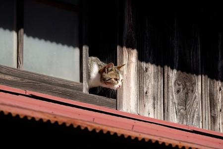 2015.12.05 和泉川 納屋猫