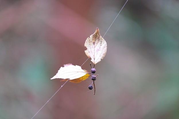 2015.12.06 瀬谷市民の森 枯葉実