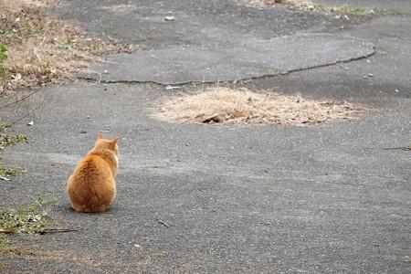 2016.02.04 山手 空き地と猫