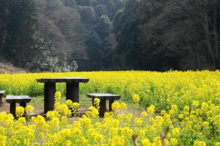 2016.03.13 追分市民の森 菜の花祭