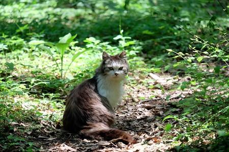 2016.05.15 瀬谷市民の森 ネコ