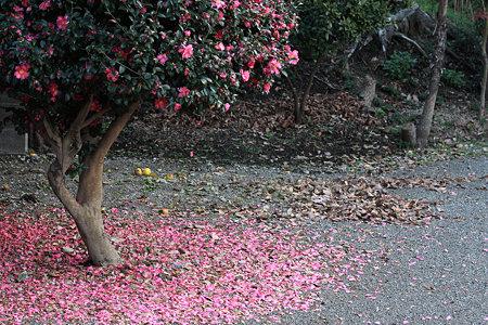 2009.12.05 和泉川 ピンクの影