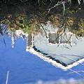 Photos: 2010.11.20 和泉川 川面