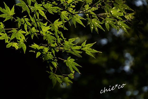 瑞泉寺-059