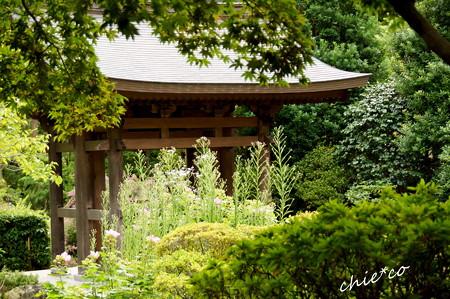 海蔵寺-116