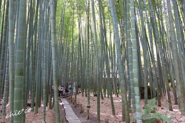 鎌倉-275