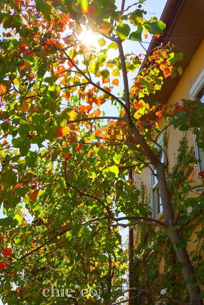 花菜ガーデン-285