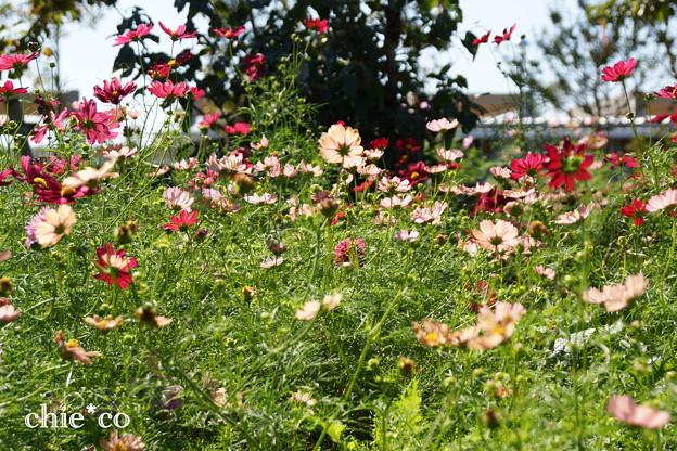 花菜ガーデン-310
