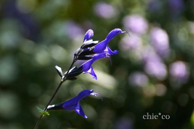 花菜ガーデン-318