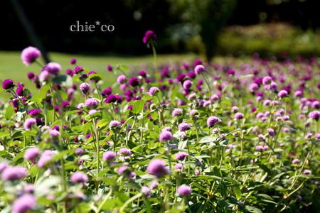 花菜ガーデン-321