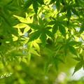 Photos: 北鎌倉-249