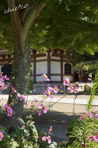 北鎌倉-266
