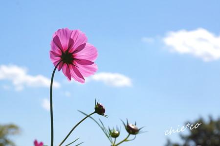昭和記念公園-376