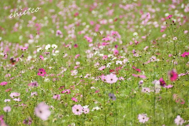 昭和記念公園-387