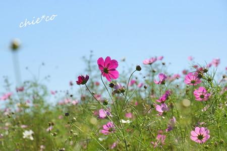 昭和記念公園-394