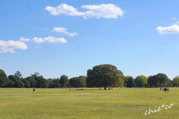 昭和記念公園-433