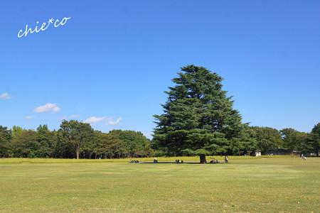昭和記念公園-438
