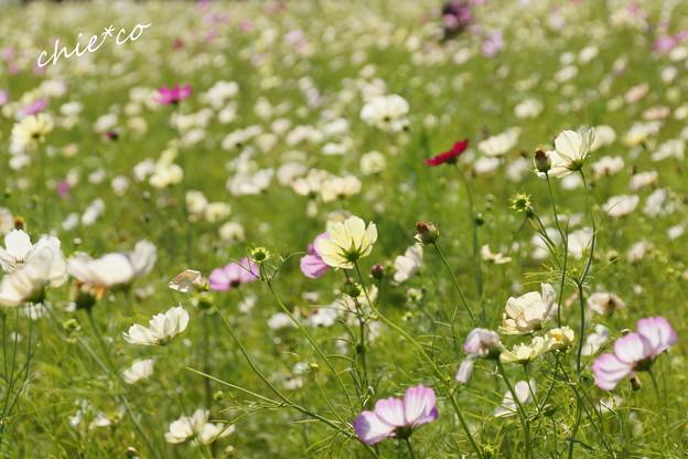 昭和記念公園-440