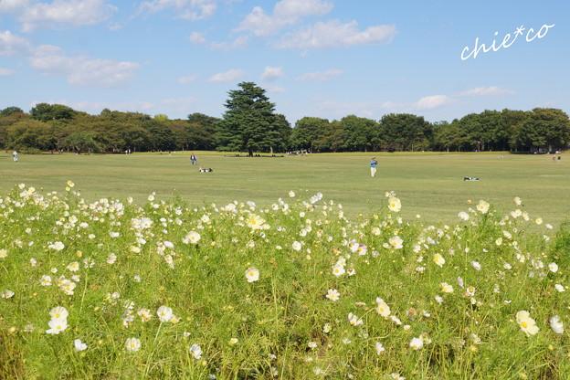 昭和記念公園-447