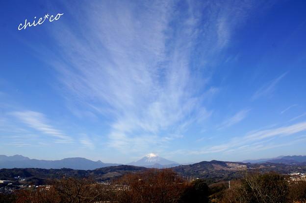 吾妻山公園-151