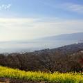 写真: 吾妻山公園-162