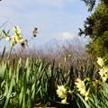 写真: 吾妻山公園-166