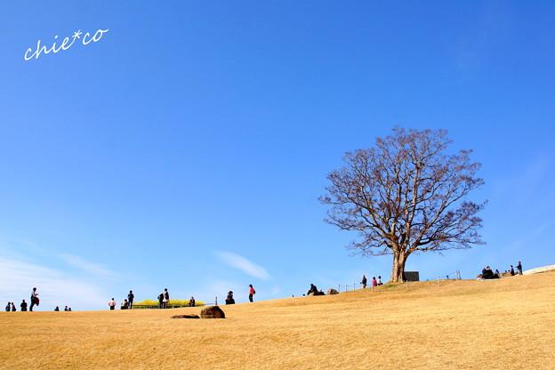吾妻山公園-177